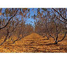 """peaches"" Photographic Print"