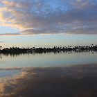 Carnarvon Cloudy day by Fitchat
