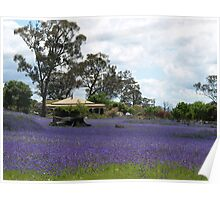 Sunny Brae Farm --   NSW   Australia Poster