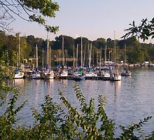 Sailboats on Lake Decatur, Decatur IL by Mona Gainey-Lanier