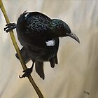 A tui moment by Pam Buffery