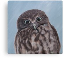Looking at you - morepork Canvas Print
