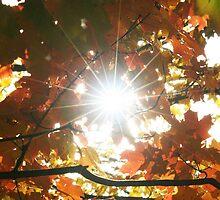 Autumn Star Burst by Terry Aldhizer