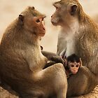 Macaque Family - Angkor Thom, Cambodia by Alex Zuccarelli