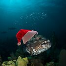 Happy Holidays Grouper by Todd Krebs