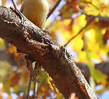 Autumn woodpecker by John Banks