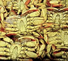 Dungeness Crabs by Scott Johnson