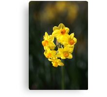 Jonquil Cluster Canvas Print