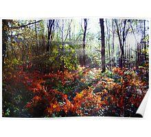 Autumn Woodland Glade Poster