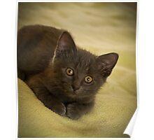 """"""" A Sweet Little Kitten Called Jasper """" Poster"""