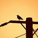 Bird On A Wire by LividPhoto