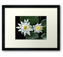 Sirius Flowers Framed Print