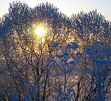 Winter trees by Andrey Kudinov