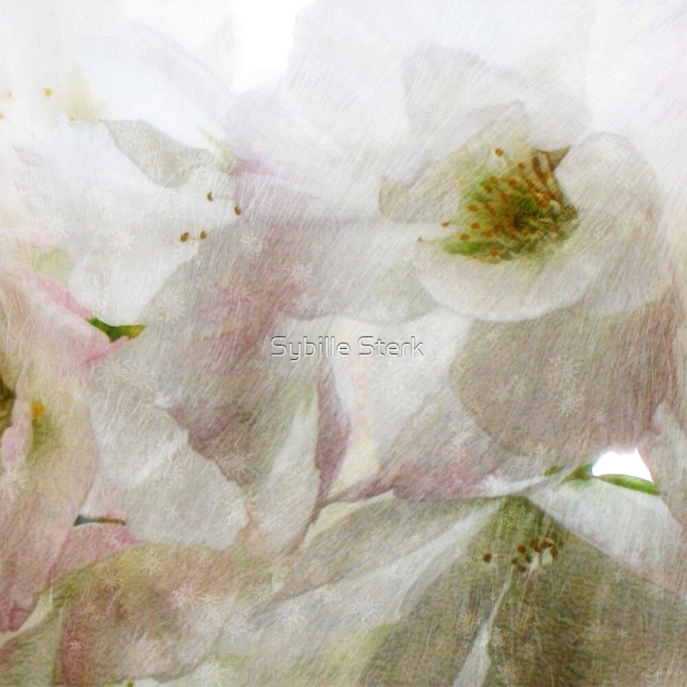 Snow Dreams Collection - Cherryblossom by Sybille Sterk