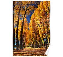 Autumn Trees on the shores of Lake Wanaka Poster