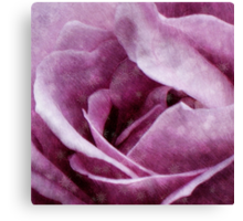 Snow Dreams Collection - Rose Canvas Print