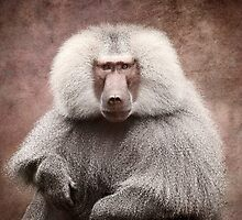 Hamadryas Baboon by Michelle Joyce