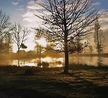 Sunrise and Tree Shadows by ienemien