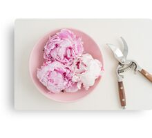 Freshly cut peony blossoms on pink plate Canvas Print
