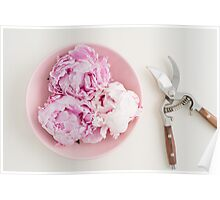 Freshly cut peony blossoms on pink plate Poster