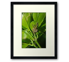 Hiding in the lime tree Framed Print