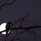 Late Night Kookaburra by Vikki Shedden Photography