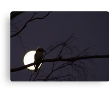 Late Night Kookaburra Canvas Print