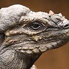 Rhinocerous Iguana by Steve Bullock