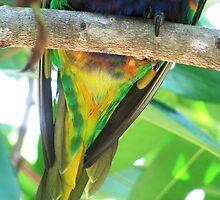lorikeet - tail feathers by Paul Ward