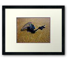 Portuguese Man-O-War Framed Print