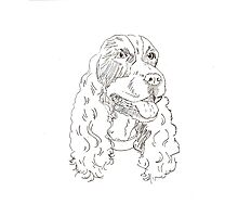 Cocker Spaniel Photographic Print