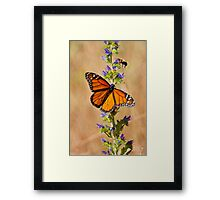 Monarch Butterfly - 33 Framed Print