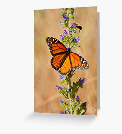 Monarch Butterfly - 33 Greeting Card