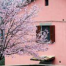 Pink on Pink-Baschi, Italy by Deborah Downes