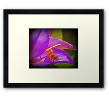 Bumble Bee Revisited Framed Print