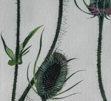 Teasels Sticker