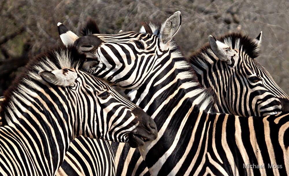 Zebras by Michael  Moss