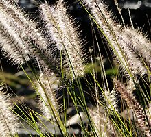 Long grass in the Summer Breeze by Stuart Meachem