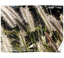 Long grass in the Summer Breeze Poster