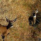 Bucks by Dave & Trena Puckett