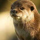 Oriental Small Clawed Otter by Tony Walton
