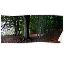 eves wood beeches panorama Poster