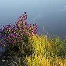 Riverina Bluebell by David Haworth