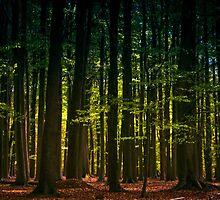 Rainbow Trees by Loren Goldenberg-Kosbab