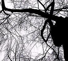 Schattenbaum by Silvia Eichhorn