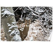 Young white-tailed doe in the snow Poster