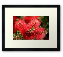 Three Brushes Framed Print