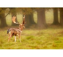 Sussex Deer on a misty morning Photographic Print