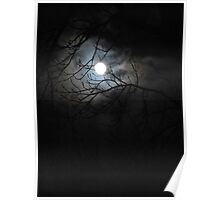 Moonlight in Spring Time  Poster