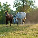 Where You Lead, I will Follow by GrayHorseDesign
